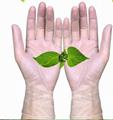 Clear Transparent Protective Powder Free Disposable Examination PVC Vinyl Gloves 3