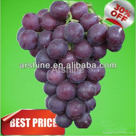 plant extract & Grape Seed for Sale Manufactory in China 1