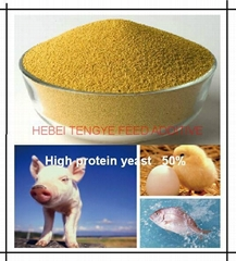 High protein yeast 50% Certificated with ISO FAMI-QS