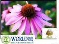 Echinacea Purpurea Extract With