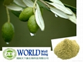 Natural Olive Leaf Extract Powder With