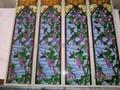 立线彩彩绘玻璃 3