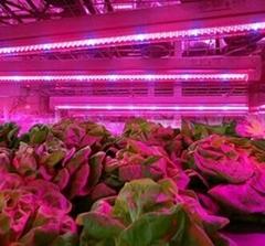 T8 LED grow light for plant