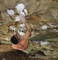 Magnesium Carbonate Gym Chalk