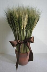 Wheat Bonsai home decoration