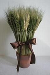 Wheat Bonsai home decora