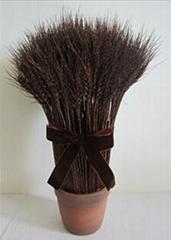 light wheat bonsai for d