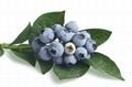 Blueberry Pterostilbene