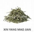Xinyang Maojian