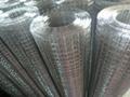 金龙2寸冷镀锌电焊网 3