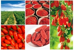 Goji Berry Supply  220pcs/50g