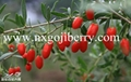 HIGH QUALITY GOJI BERRIES SUPPLY FROM NINGXIA  5
