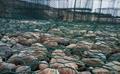 矽膠包塑石籠格賓網 3