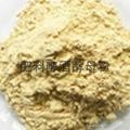 肥料級啤酒酵母粉 4