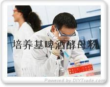 培養基生化試驗專用啤酒酵母粉 3