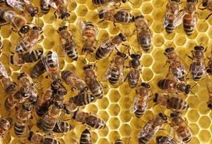 厂家直供蜜蜂用啤酒酵母粉山东酵母粉 1