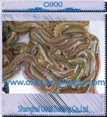 LL soft living lugworms and fresh baits