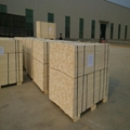 Korea market Poplar LVL plywood
