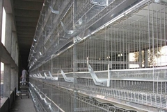 Chicken layer cage for poultry rearing farm