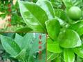 農用有機硅表面活性劑IOTA2
