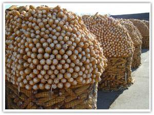 圈玉米电焊网 1
