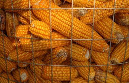 圈玉米电焊网 3
