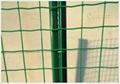 綠色PVC荷蘭網