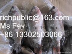 Frozen Tilapia(Oreochromis niloticus)200-300g