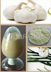 High Quality Garlic Oil