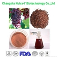 Grape Seed Extract 95% OPC 1