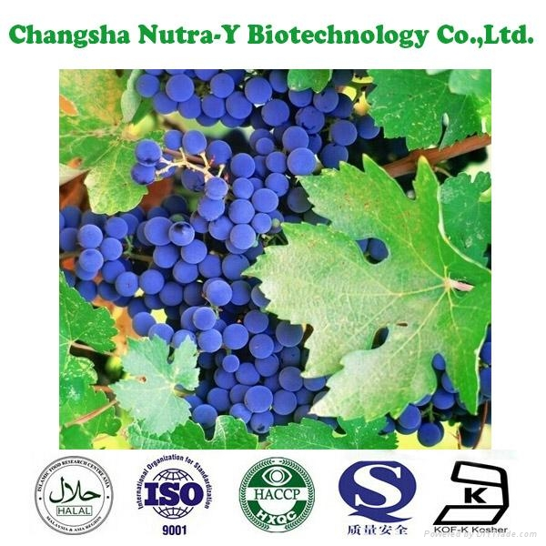 Grape Seed Extract 95% OPC 3