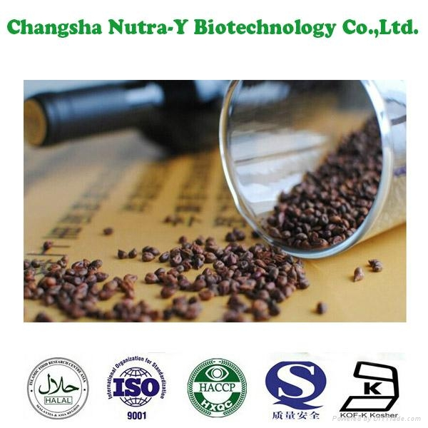 Grape Seed Extract 95% OPC 4