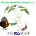 Horny Goat weed Extract Epimedium