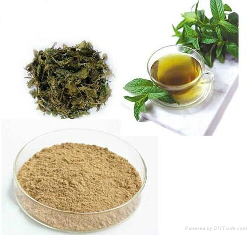 Green Tea Extract 95% EGCG 1