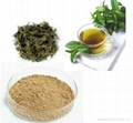 Green Tea Extract 95% EGCG