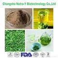 Green Tea Extract 95% EGCG 2