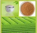 Green Tea Extract 95% EGCG 3