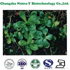 CAS: 39012-20-9 Rhizoma Picrorhizae