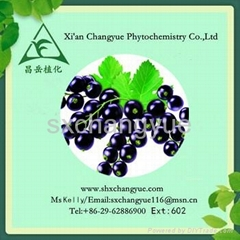 Anti-oxidant natural black currant extract