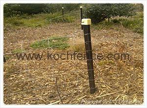 Field fence 1