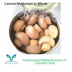 Canned Mushroom Champignons Mushroom Whole in brine