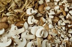 White Portabella mushroom