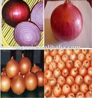 Fresh Red Onions 1