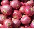2014 High Quality Red Onions,White