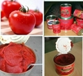 Tomato Paste with Canned Packing 4