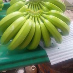 fresh bananas cavendish from Ecuador