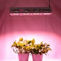Full Spectrum 4x200W COB led grow light