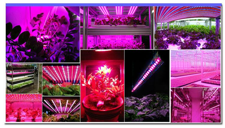 Full spectrum 18x3W 55cm Red Blue IP65 led grow light bar for any stage of plant 7