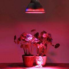 12x1W full spectrum led grow lights