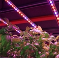 Full spectrum 18x3W 55cm Red Blue IP65 led grow light bar for any stage of plant